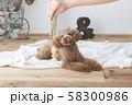 モデルと犬 58300986