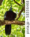 オウギバト  よこはま動物園ズーラシアより 58356468