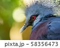 オウギバト  よこはま動物園ズーラシアより 58356473