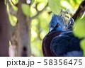 オウギバト  よこはま動物園ズーラシアより 58356475
