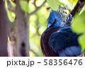 オウギバト  よこはま動物園ズーラシアより 58356476