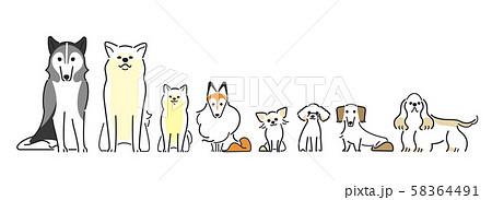 犬 ポーズ 表情 8匹 整列 おすわり 58364491
