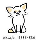 犬 ポーズ 表情 1匹 ちわわ おすわり 58364530