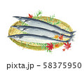 秋刀魚 さんま ひば  紅葉 ざる 58375950