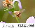 飛べ!ミツバチ 58381496