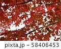 秋の紅葉 58406453