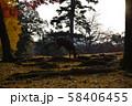 奈良公園の鹿 秋の紅葉 58406455