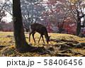 奈良公園の鹿 秋の紅葉 58406456