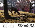 奈良公園の鹿 秋の紅葉 58406458