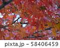 秋の紅葉 58406459