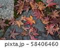 秋の紅葉 58406460