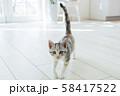 しっぽを立てて見つめる仔猫 58417522