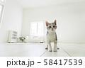 見つめる仔猫 58417539