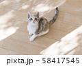 見上げる仔猫 58417545