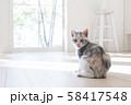 振り向く仔猫 58417548