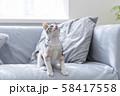 ソファで見上げる仔猫 58417558