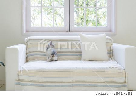 ソファに座って振り向く仔猫 58417581