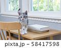 机の上の仔猫 58417598