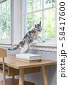 窓辺の仔猫 58417600