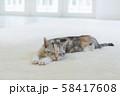 カーぺットで眠る仔猫 58417608