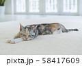 カーぺットで眠る仔猫 58417609