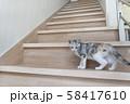 階段で振り返る仔猫 58417610