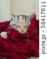 赤い毛糸のマフラーに包まって眠る仔猫 58417611
