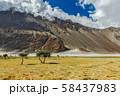 Landscape of Nubra valley. Hunber, Nubra valley, Ladakh, India 58437983