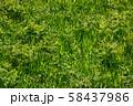 Lush greenery grass in field meadow 58437986
