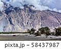 Nubra valley, Ladakh, India 58437987