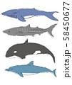 海の大きな生き物 ベクター 58450677