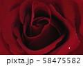 薔薇 58475582