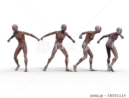 男性 解剖 筋肉 3DCG イラスト素材 58501114