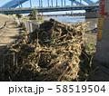 台風後の河川敷に流れ着いた木、ゴミ 58519504