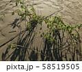 台風後の河川敷の地面と木 58519505