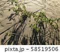 台風後の河川敷の地面と木 58519506
