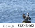 【海鵜 沼津】 58543462