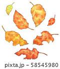 落ち葉と枯葉 58545980