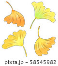イチョウの葉 58545982