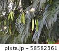 ねむの木 58582361