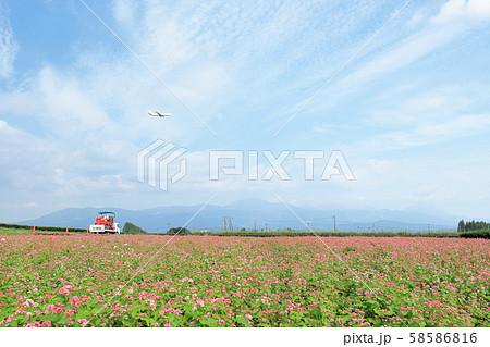 陵北ふれあい農園の赤ソバ畑と飛行機 奥には霧島連山 58586816