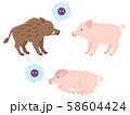 イノシシから豚へのウイルスの媒介・病気の豚のイメージイラスト 58604424