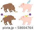 イノシシと豚のワクチン接種のイメージイラスト 58604764