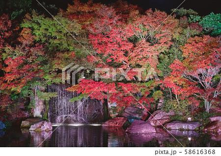 夜の好古園の紅葉 58616368