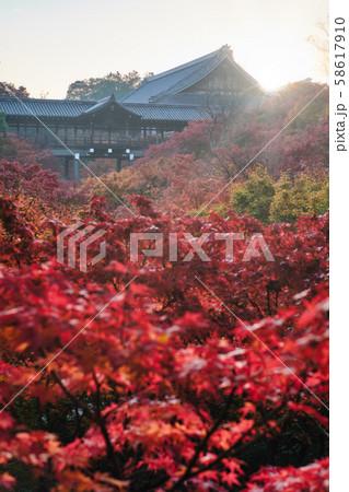 東福寺の通天橋と紅葉 58617910
