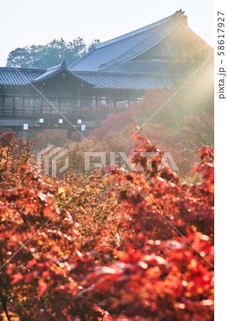 東福寺の通天橋と紅葉 58617927
