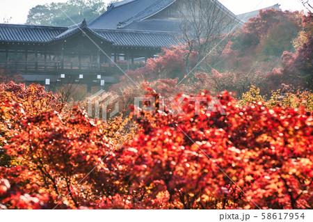 東福寺の通天橋と紅葉 58617954