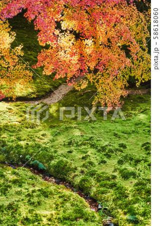 秋の瑠璃光院 58618060