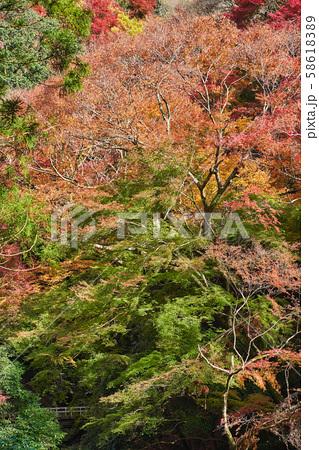 秋の箕面公園 58618389