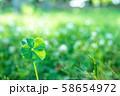 キラキラ輝く幸運の四つ葉のクローバー 朝方 58654972